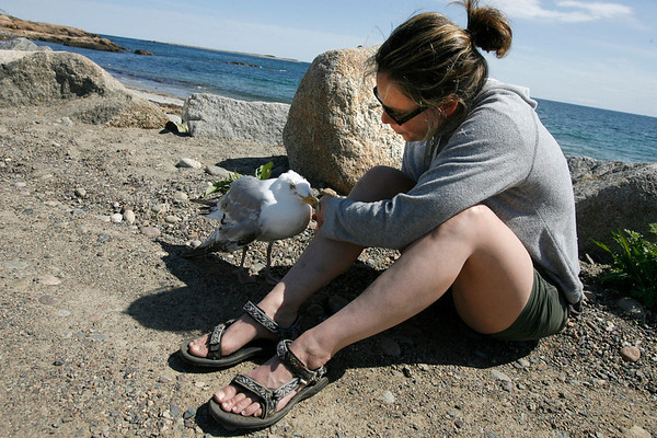 Rockport: Kim Kvaracein of Sturbridge sits next to a seagull with a broken wing at Pebble Beach on Monday afternoon. Kvaracein wanted to help the bird, but did not know what to do. According to Jodi Swenson, a local wildlife rehabilitator, people should either contact her or a veterinary hospital to see if the animal can be revived. Photo by Kate Glass/Gloucester Daily Times Monday, May 11, 2009
