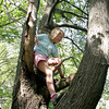 Essex: Abby Lantz, 8, of Essex climbs down a tree in her neighborhood Friday afternoon.  Abby had climbed the tree with her friend Claire O'Brien and made it up to some of the top branches beofore heading back down to ride her bike. Mary Muckenhoupt/Gloucester Daily Times