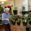 Rockport: Phyllis Krenn arranges some plants as the Rockport Garden Club prepares for their plant sale tomorrow at the Rockport Community House. the sale wil be held from 9-1 but Krenn advises getting there early for the best selection. Mary Muckenhoupt/Gloucester Daily Times