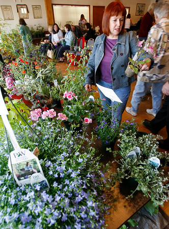 Manchester: Allison Cohen of Wenham looks at rehmannia that was up for auction at the North Shore Horticultural Society's annual plant sale on Tuesday evening. Contributions from the sale and auction benifit the society. Photo by Kate Glass/Gloucester Daily Times Tuesday, May 26, 2009