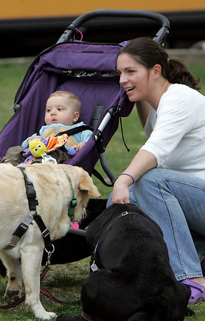 Manchester: Bode Dodge, 7 months, of Manchester watches his first lacrosse game at Coach Ed FIeld Field with his mom Kate and dogs Buch and Simon while taking a break from their walk Friday afternoon. Mary Muckenhoupt/Gloucester Daily Times