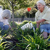 Rockport: Mary Chaisson, left, and Marilyn Thompson of the Rockport Garden Club remove weeds from the traffic island at Five Corners yesterday afternoon in preparation for new plants to go in. Members of the club will be working in several areas around town, including the library and fire station. Photo by Kate Glass/Gloucester Daily Times Thursday, May 21, 2009