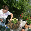 Manchester: Marilyn Donati designs a hanging basket at Utopis Farms in Manchester Wednesday afternoon.  Donati was going for color when she was adding in differnet kinds of flowers to the basket that is going to a business in Wellesley. Mary Muckenhoupt/Gloucester Daily Times