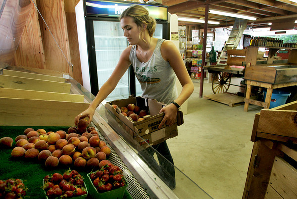 Gloucester: Kate Fini empties a crate of Peaches while getting Marshall's Farm Stand ready for business Friday morning.  Marshall's Farm Stand located on Concord Street in Gloucester is the area's most popular spot for buying fresh produce. Mary Muckehoupt/Gloucester Daily Times