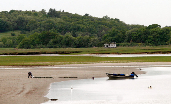 Essex: A clammer digs in the flats off Conomo Point Tuesday morning. Photo by Kate Glass/Gloucester Daily Times