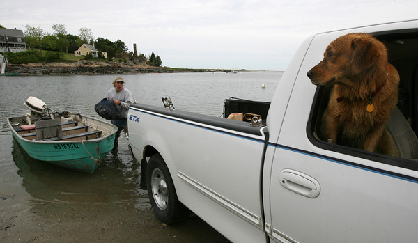 Essex: Mason watches as Steve Hemeon of Essex loads clams into his truck after a day of digging off Conomo Point. Hemeon says his dog always goes clamming with him and jumps in the holes to dig up his own clams. Photo by Kate Glass/Gloucester Daily Times