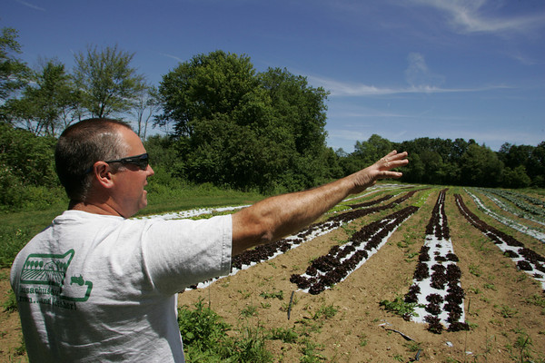 Ipswich: Bob Marshall, owner of Marshall's Farm Stand in Gloucester, points to the various vegetables he has growing, which include lettuce, cauliflower, broccoli and peas, at one of his fields in Ipswich Friday morning. In a joint venture with Marini's Farm in Ipswich Marshall has about a dozen fields in Ipswich and Hamilton where he grows his local produce. Mary Muckenhoupt/Gloucester Daily Times