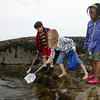 Gloucester: Max Murdock, Gracie O'Toole, and Bernica Wilcox, all students in Mrs. McKechnie's second grade class at West Parish Elementary School, explore tidal pools at Wingaersheek Beach yesterday morning. The students were exploring the relationships between living creatures and their habitat through a program sponsored by the Gloucester Education Foundation. Photo by Kate Glass/Gloucester Daily Times
