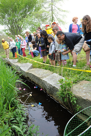 Rockport: Participants and spectators watch and cheer for their duck as they float past them in a steam at The 5th Annual Lucky Duck Race at Millbrook Park Saturday afternoon. For a $5.00 entery fee per duck the money raised goes to the Rockport Council on Aging in rendering services to the elderly, sponsored by The Friends of the Rockport Council on Aging. Resident Mary Bronan was the Lucky Duck winner,taking the 1st place prize of $200.00,Helen Sutherland took 2nd of $50.00 and Donald Smith 3rd of $50.00 Desi Smith/Gloucester Daily Times.