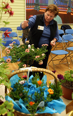 Kate Willwerth of the Seaside Garden Club arranges plants for their annual auction fundraiser at the Manchester Community Center on Tuesday. The club meets monthly from September to June and this year will offer programs on how to photograph gardens, creating herbal gifts from the garden, as well as attracting birds and butterflies. Photo by Kate Glass/Gloucester Daily Times
