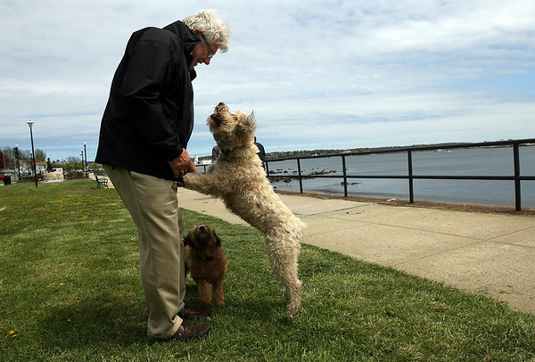 Gloucester: David Anderson walks his dogs, Chloe and Kenzie, along Stacy Boulevard yesterday afternoon. Chloe is Kenzie's mother and both usually spend the day at David's shop, The Black Swan, on Main Street. Photo by Kate Glass/Gloucester Daily Times