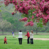 Manchester:  ( In Bloom)  Parents watch their children play at Massconomo Park, while enjoying one of best days so far this month. Desi Smith/Gloucester Daily Times.