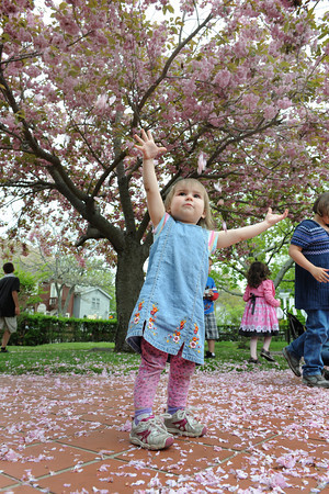 Rockport: Danielle Orr 2, of Rockport, throws blossom peddles into the air, as her way of celebrating Motif#1 Celebration Day held Saturday in Rockport.  Desi Smith/Gloucester Daily Times.