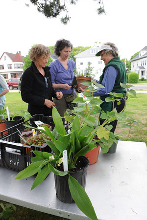 "Gloucester: Gardener's Martha Peabody and Louise Grindrod both from Gloucester talk with a Garrden Club member about a plant at the Gloucester Garden Club's  annual ""Hello Spring!"" plant sale Saturday afternoon next to the tennis court on Stacy Boulevard. Where beginners and experienced gardeners came to pick up an assortment of tried and true plants from members' gardens. Proceeds fund community plantings and other good works..Desi Smith/Gloucester Daily Times."