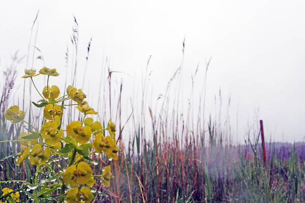 Rain falls on a coloful Essex salt marsh on Tuesday afternoon. Jesse Poole/Gloucester Daily Times May 1, 2012