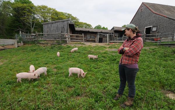 Essex: Liz Green, of the Apple Street Farm in Essex, checks on her piglets as they graze in an open field. JIm Vaiknoras/staff photo