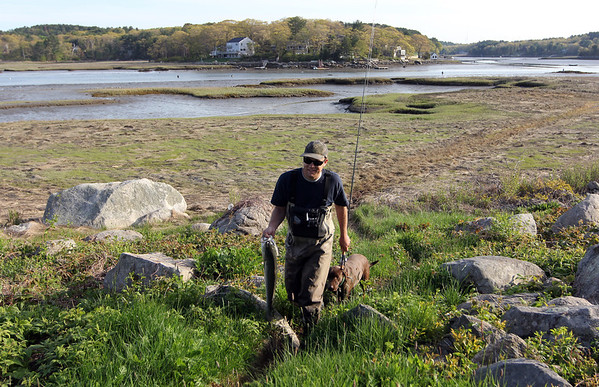 ALLEGRA BOVERMAN/Staff photo. Gloucester Daily Times. Gloucester: Dan Gray, 25, of Manchester, along with his chocolate lab, Boo, 3, at the Little River on Monday afternoon. He caught his first striper of the season there, a new fishing spot for him. He's been fishing since he was in diapers, he said. His mom, he said, is always telling him to bring her a fish. This was it, for dinner.