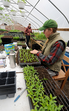 Essex: Lindsay Allen and Liz Green, of the Apple Street Farm in Essex, <br /> fill planters in the greenhouse at the farm. JIm Vaiknoras/staff photo