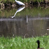 130510_GT_ABO_BIRDS