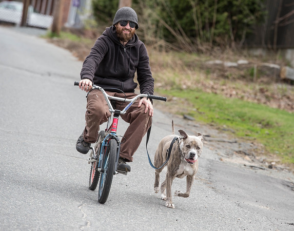 Desi Smith/Staff/Photo.  Sean McCann of Gloucester takes his dog Mr. Eko for a run down Whittemore Street Friday morning.    May 1,2015.