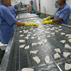 Gloucester: Good Harbor Fillet is producing pollock nuggets that are low in sodium and use whole grain. These products will be served in school lunches across the country as part of the USDA's effort to provide healthier alternatives to traditional proteins. Photo by Kate Glass/Gloucester Daily Times Wednesday, November 18, 2009