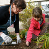 "Rockport: Julia Jones, 6, helps Kathy Hilliard plant tulip bulbs in the Peace Garden in front of Rockport High School on Monday afternoon. The garden is being ""put to bed"" for the winter, but will be in full bloom this spring with tulips, daffodils, and crocuses. Photo by Kate Glass/Gloucester Daily Times Monday, November 9, 2009"