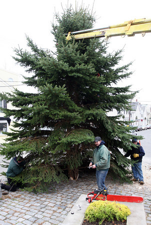Rockport: Jeremy Carr of Ace Hardware, center, removes tools from the ground as he and members of the Rockport DPW set up the town's Christmas tree in Dock Square yesterday afternoon. The tree was donated by Sunny Favaloro. Photo by Kate Glass/Gloucester Daily Times Tuesday, November 24, 2009