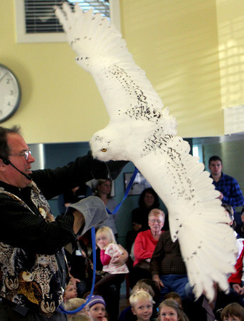 As the Snowy Owl demonstrates the length of it's wings, Mark Wilson of Eyes on Owls, educates the crowd of adults and children in the Manchester Community Center about where this type of owl can be located. At times, perhaps even in Manchester, said WIlson. Jesse Poole/Gloucester Daily Times Nov. 3, 2011