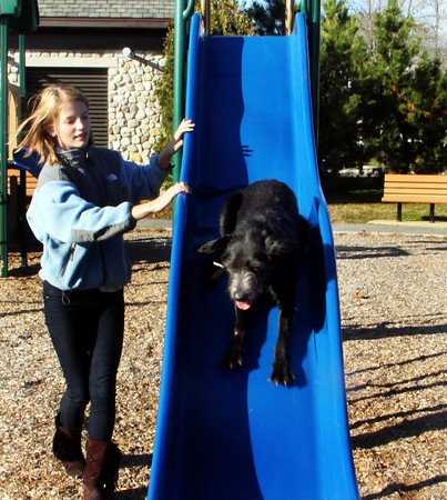 Seventh-grader Sasha Ball, of Essex, has successfully trained her dog, Nelly, to skid down the slide at Shepard Memorial Park. Jesse Poole/Gloucester Daily Times Nov. 4, 2011