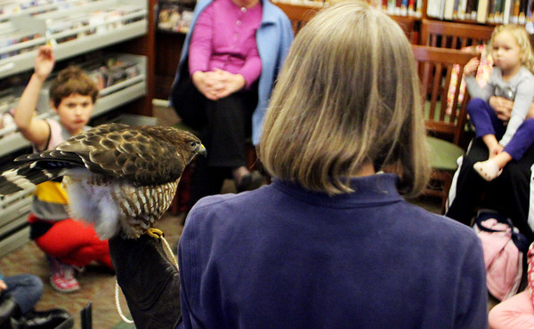 MANCHESTER—Children at the Manchester Public Library ask questions about the bird Pat Cochran is holding on Wednesday afternoon. This kawk was brought up, along with a woodchuck, from Drumlin Farm Wildlife Sanctuary in Lincoln as part of a Mass Audubon sponsored education program, teaching children about mammals and birds. Jesse Poole/Gloucester Daily Times Nov. 17, 2011