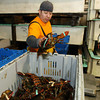 ALLEGRA BOVERMAN/Staff photo. Gloucester Daily Times. Gloucester: Neri Blas, manager of the lobster department at Intershell Seafood Corp, grades lobsters and packs them into containers in 100-pound increments. The lobsters were then going into chilled water tanks to properly stabilize the lobsters for shipping.