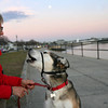 ALLEGRA BOVERMAN/Staff photo. Gloucester Daily Times. Gloucester: Spike, 10, right, makes happy sounds while seated along Stacy Boulevard on Tuesday afternoon with owner Patty Knaggs of Gloucester.