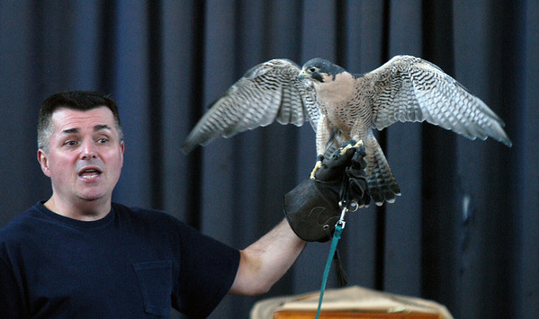 JIm Vaiknoras/Gloucester Daily Times. JIm Parks of Wingmasters shows off a peregrine falcon to students at the Beeman Elementary School in Gloucester Monday. Along with the falcon Parks brought , a American kestrel and a number of owls.