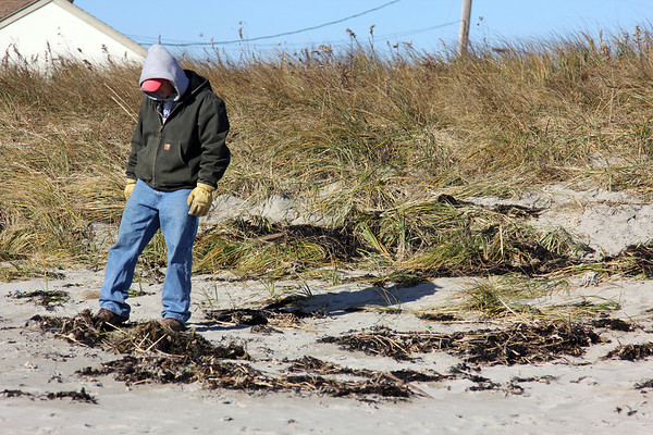 Allegra Boverman/Gloucester Daily Times. Anthony Harrison, father of missing toddler Caleigh Harrison, was looking on Good Harbor Beach for any sign of his daughter on Wednesday during a search  of several beaches with volunteers from Mission for the Missing.