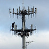 ALLEGRA BOVERMAN/Staff photo. Gloucester Daily Times. Workers perch high up in a cell phone tower in Gloucester visible from the Route 128 Extension on Monday,