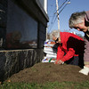 Rockport: Mary Ruth Sole and Peggy Coonley plant bulbs as the Rockport Garden Club plants 600 daffodil bulbs at the American Legion Bandstand Friday morning.  The Garden Club is working on planting 4,000 bulbs in public spaces around Rockport. Mary Muckenhoupt/Gloucester Daily Times