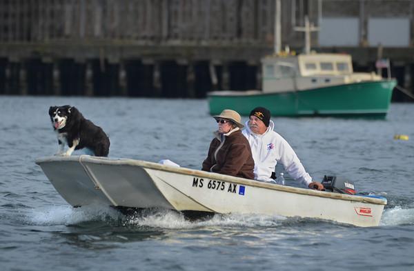 Seafaring Dog