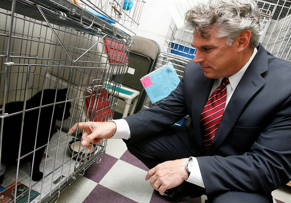 Gloucester: Patrick Thorpe, President of BankGloucester, pets one of the cats up for adoption at Cape Ann Animal Aid after presenting the organization with a check for $5,000 for receiving the most votes in their community grants ballots. The bank donated $15,000 to 15 community organizations on Cape Ann. Photo by Kate Glass/Gloucester Daily Times Monday, October 5, 2009
