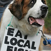 Gloucester: Max, a Saint Bernard, carries a sign around his neck at the protest against NOAA NMFS regulations at the NOAA building Friday morning. Mary Muckenhoupt/Gloucester Daily Times