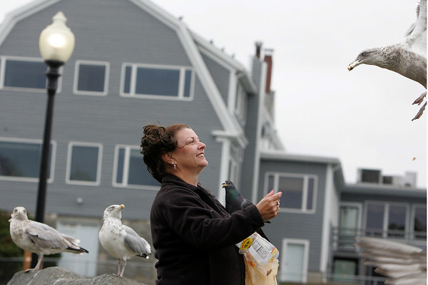 Gloucester: With a pigeon perched on her arm Evie Ouellette of Gloucester feeds the seagulls and pigeons on Satcy Boulevard Friday afternoon.  The birds recognize Ouellette when she arrives at the boulevard as she come just about every day to feed the birds. Mary Muckenhoupt/Gloucester Daily times