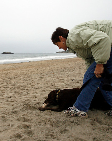 Manchester: Florence Doyle of Manchester tries to pry her dog, Calvin, away from a bone he found at Singing Beach yesterday afternoon so they could continue their walk. Photo by Kate Glass/Gloucester Daily Times Tuesday, October 27, 2009