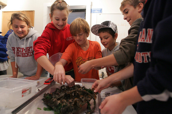 Gloucester: From left Jessica Collins, Shelby Gale, Andrew Gleckner, Valentin Debouzy and Adam Rudolph pick out creatures from a settling plate that had been left in the ocean for over a year at the Maritime Heritage Center Thursday morning.  The Rockport seventh graders were amazed, and sometimes a little grossed out by all the creatures they found. Mary Muckenhoupt/Gloucester Daily Times