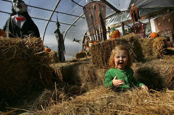 Gloucester: Charlotte Geyer, 2, makes her way through the haystack maze at Wolf Hill Home and Garden Fall Festival Saturday afternoon.  The festival included such activities as face painting, scarecrow making, pumpkin decorating and much more. Mary Muckenhoupt/Gloucester Daily Times