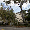 Gloucester: A large tree fell taking down power lines on Mt. Vernon Street in Gloucester Friday afternoon. Mary Muckenhoupt/Gloucester Daily Times