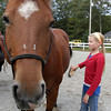Caroline King, 11, of Gloucester, grooms the Foxy Lady at Sandy Bay Stables. David Le/Gloucester Daily Times