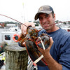 Allegra Boverman/Gloucester Daily Times. Joey Ciaramitaro of Captain Joe and Sons Wholesale Lobster Company with one of his lobsters. Massachusetts Lobster Day is on Saturday.
