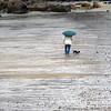 Allegra Boverman/Gloucester Daily Times. A rainy walk along Front Beach in Rockport on Friday afternoon.