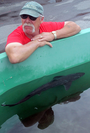Allegra Boverman/Gloucester Daily Times. Maritime Gloucester was experimenting with having dogfish on display at their center over the summer and early fall. The dogfish were returned to their habitat after the center determined that captivity wasn't ideal for these small sharks.