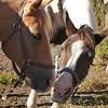 131001_GT_ABO_HORSES_2