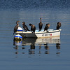 131002_GT_MSP_CORMORANTS_01